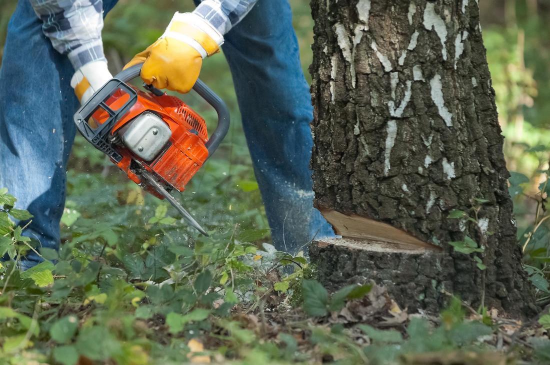 Tree Cutting Vaughan